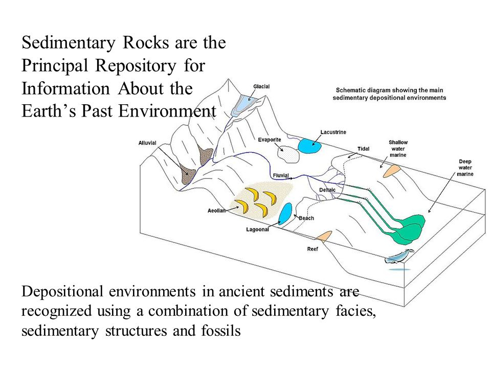 Clastic (terrigenous or detrital) –Conglomerate or Breccia –Sandstone –Siltstone –Shale Chemical/biochemical –Evaporites –Carbonate sedimentary rocks (limestones and dolostone) –Siliceous sedimentary rocks Organic (coals) –Other - ironstones Types of Sedimentary Rock