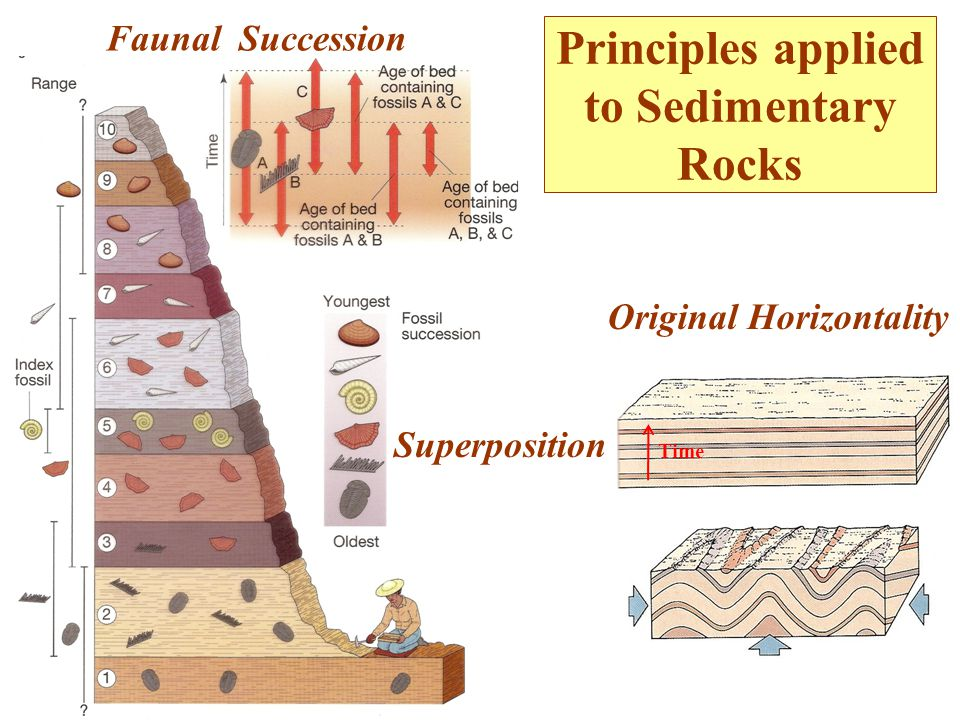 Principles applied to Sedimentary Rocks Superposition Original Horizontality Faunal Succession Time