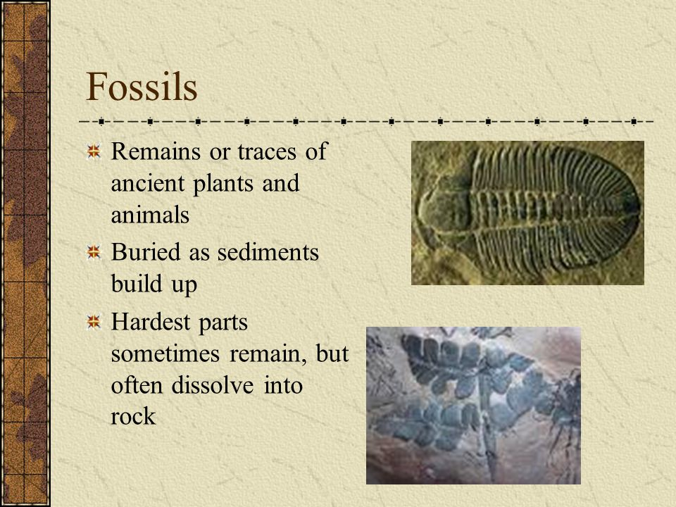 Fossils Remains or traces of ancient plants and animals Buried as sediments build up Hardest parts sometimes remain, but often dissolve into rock