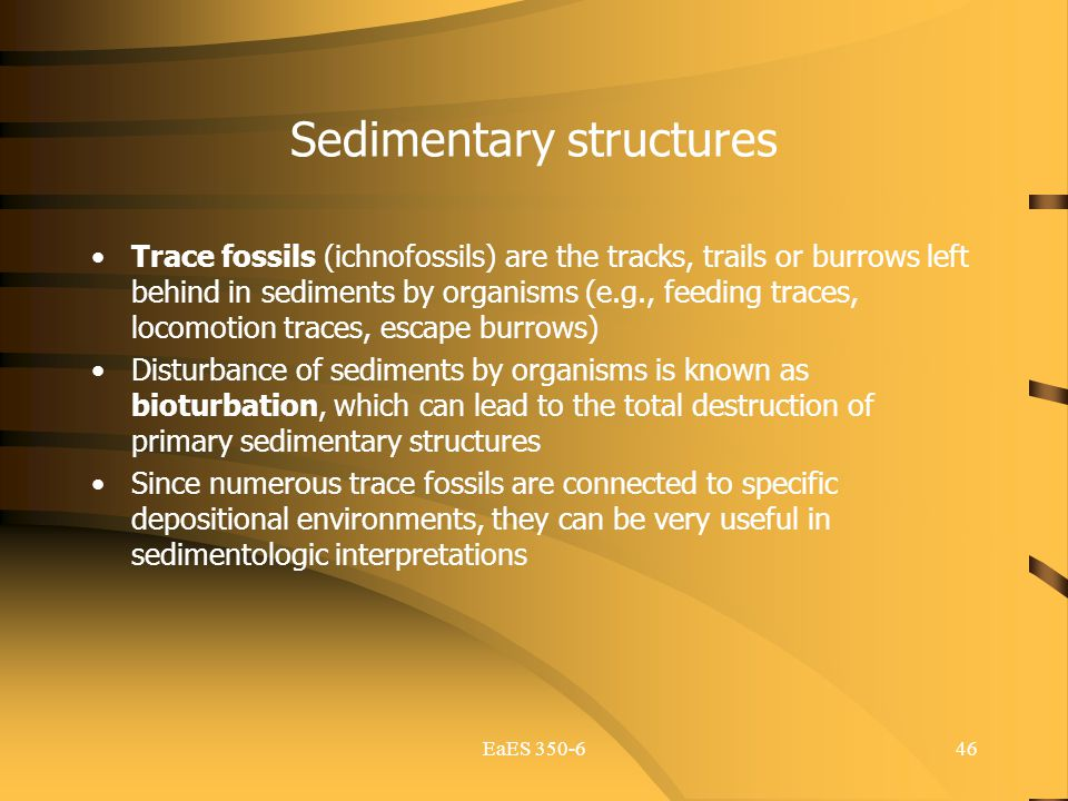 EaES 350-646 Sedimentary structures Trace fossils (ichnofossils) are the tracks, trails or burrows left behind in sediments by organisms (e.g., feedin