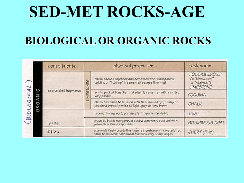SED-MET ROCKS-AGE biological (organic) rocks accumulation of animal shells or plant material then lithified--particle size is not important in naming biological rocks