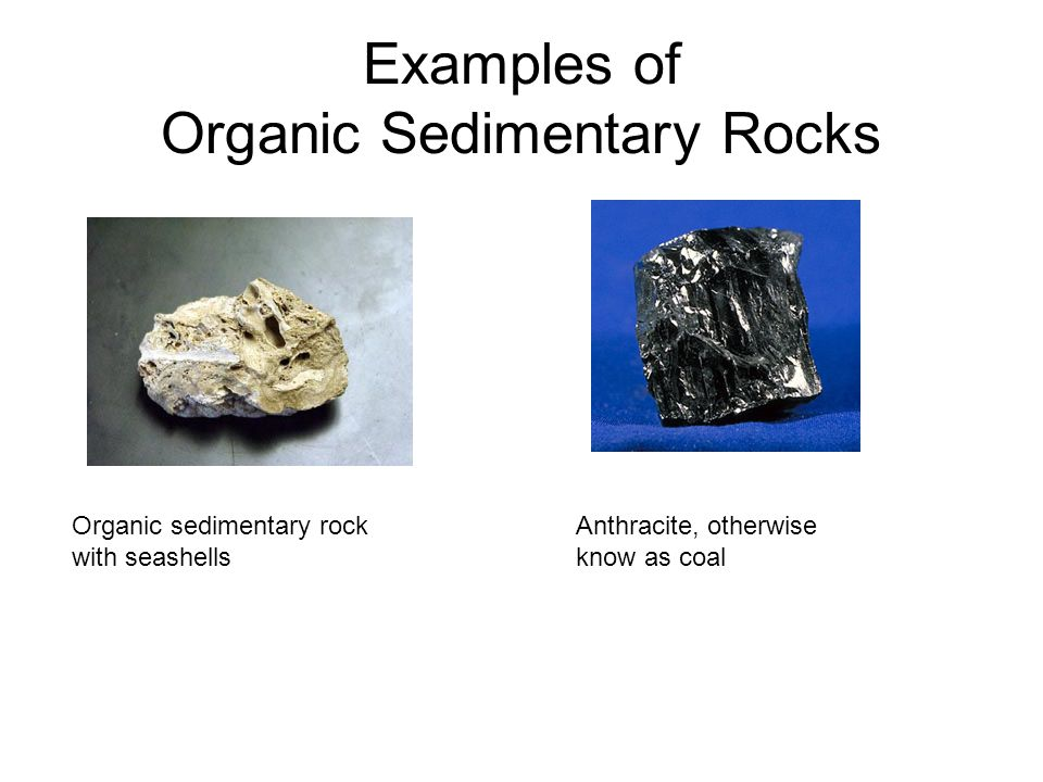 Examples of Organic Sedimentary Rocks Organic sedimentary rock with seashells Anthracite, otherwise know as coal