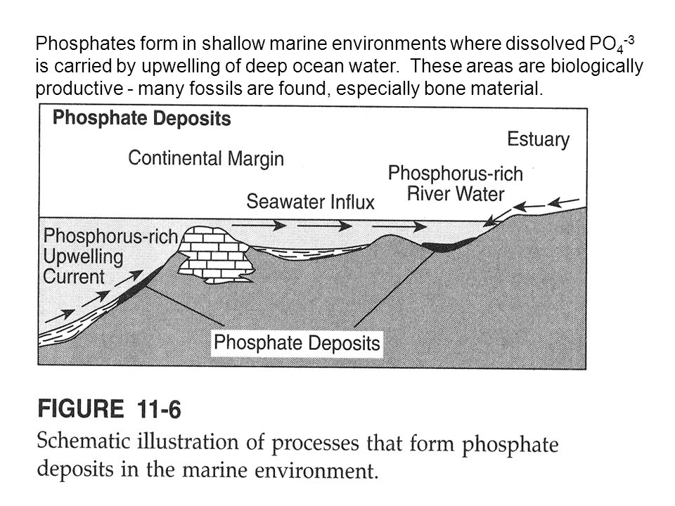 Phosphates form in shallow marine environments where dissolved PO 4 -3 is carried by upwelling of deep ocean water. These areas are biologically produ