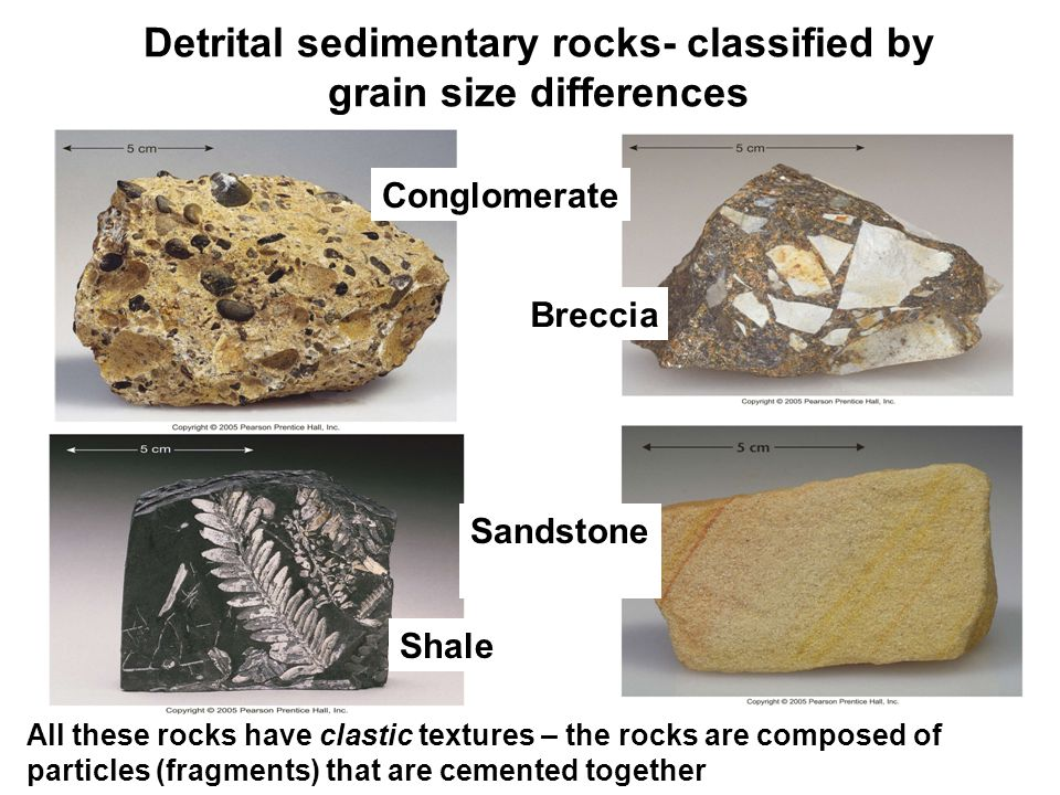 Detrital sedimentary rocks- classified by grain size differences Conglomerate Breccia Sandstone Shale All these rocks have clastic textures – the rocks are composed of particles (fragments) that are cemented together