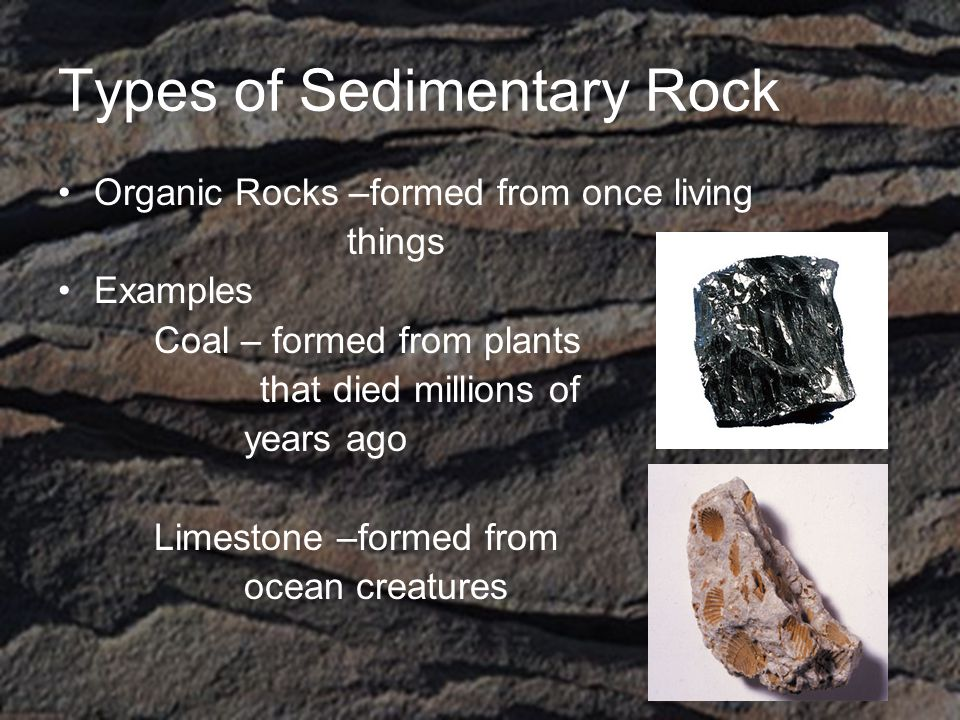 Types of Sedimentary Rock Organic Rocks –formed from once living things Examples Coal – formed from plants that died millions of years ago Limestone –formed from ocean creatures