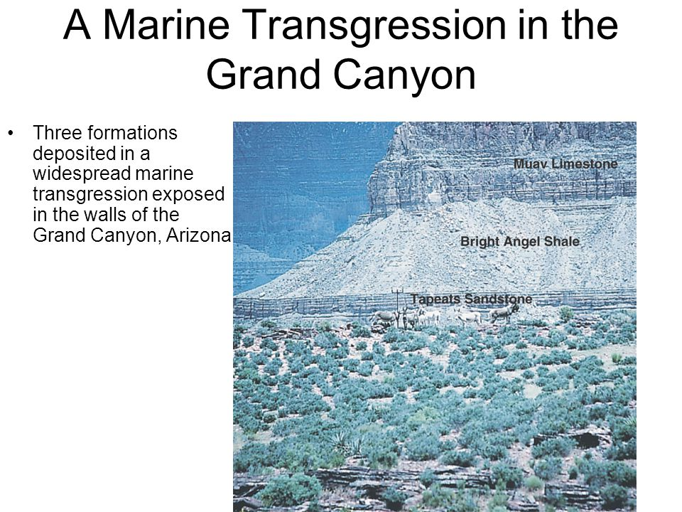 Three formations deposited in a widespread marine transgression exposed in the walls of the Grand Canyon, Arizona A Marine Transgression in the Grand