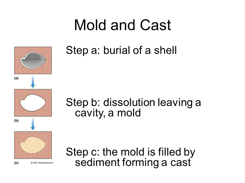 Mold and Cast Step a: burial of a shell Step b: dissolution leaving a cavity, a mold Step c: the mold is filled by sediment forming a cast