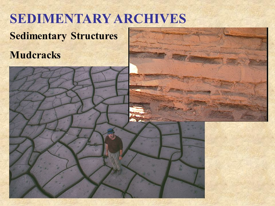 SEDIMENTARY ARCHIVES Sedimentary Structures Mudcracks
