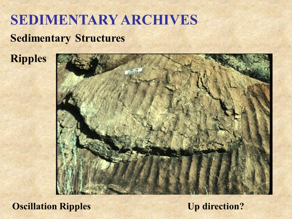 SEDIMENTARY ARCHIVES Sedimentary Structures Ripples Oscillation RipplesUp direction?