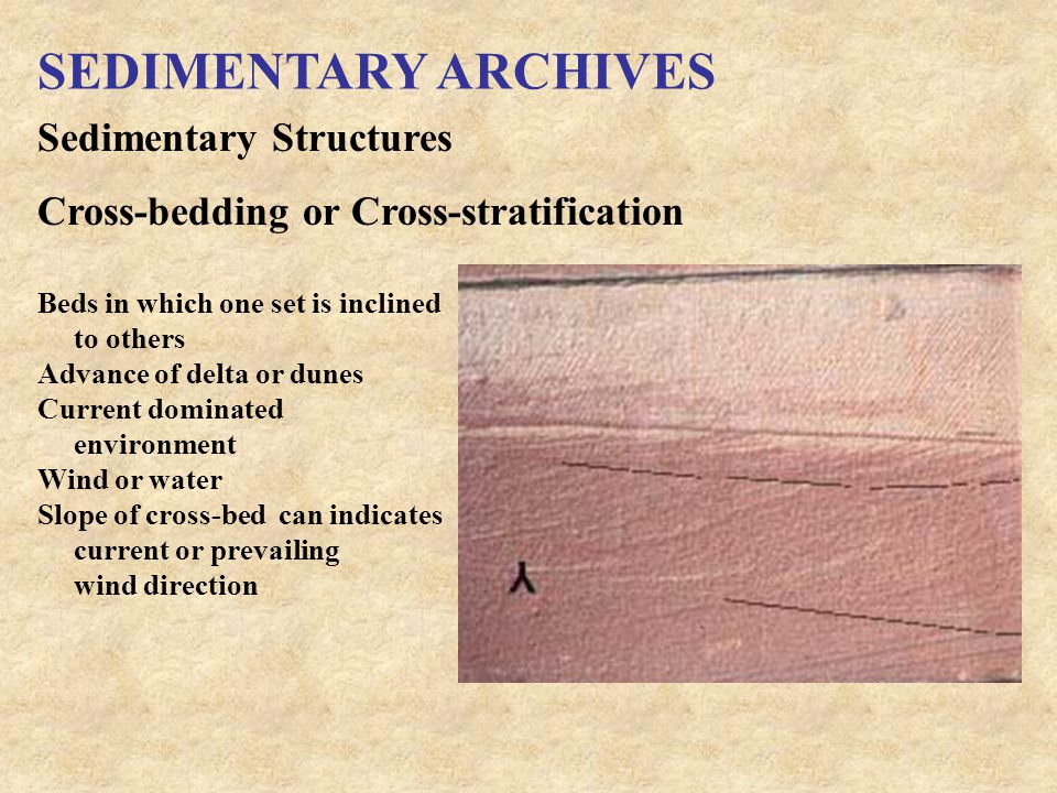 SEDIMENTARY ARCHIVES Sedimentary Structures Cross-bedding or Cross-stratification Beds in which one set is inclined to others Advance of delta or dunes Current dominated environment Wind or water Slope of cross-bed can indicates current or prevailing wind direction