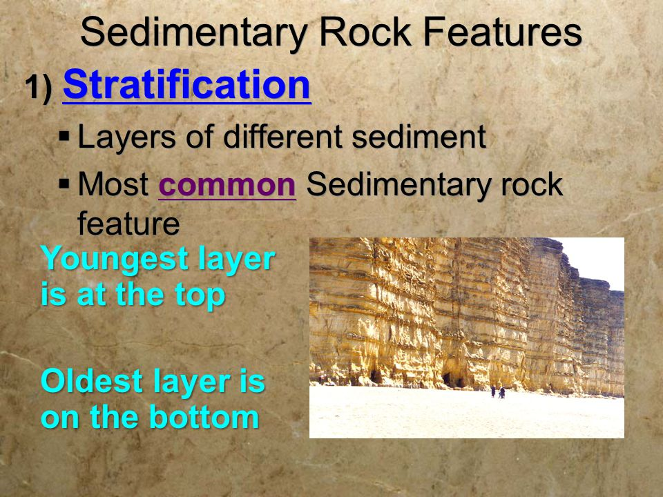 Sedimentary Rock Features 1) Stratification  Layers of different sediment  Most common Sedimentary rock feature 1) Stratification  Layers of different sediment  Most common Sedimentary rock feature Youngest layer is at the top Oldest layer is on the bottom