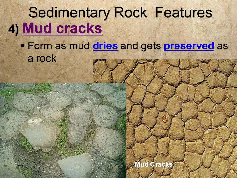 Sedimentary Rock Features 4) Mud cracks  Form as mud dries and gets preserved as a rock 4) Mud cracks  Form as mud dries and gets preserved as a rock Mud Cracks
