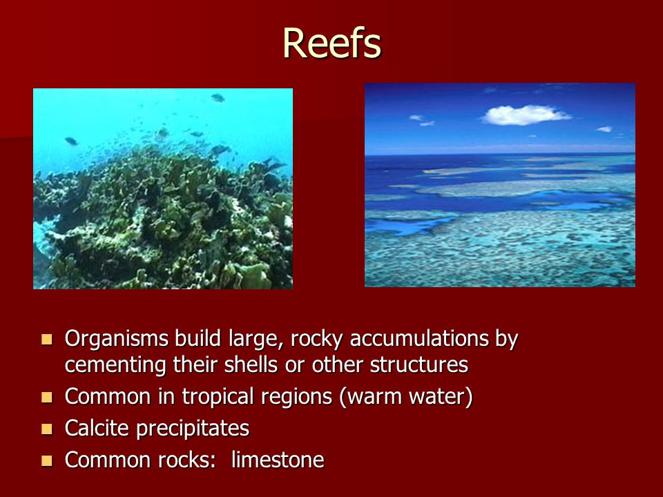Reefs Organisms build large, rocky accumulations by cementing their shells or other structures Organisms build large, rocky accumulations by cementing