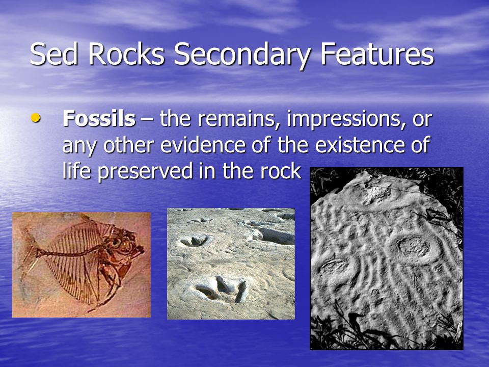 Sed Rocks Secondary Features Fossils – the remains, impressions, or any other evidence of the existence of life preserved in the rock Fossils – the re