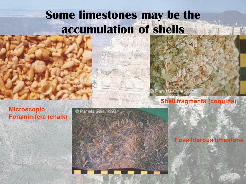 Some limestones may be the accumulation of shells Microscopic Foraminifera (chalk) Shell fragments (coquina) Fossiliferous limestone