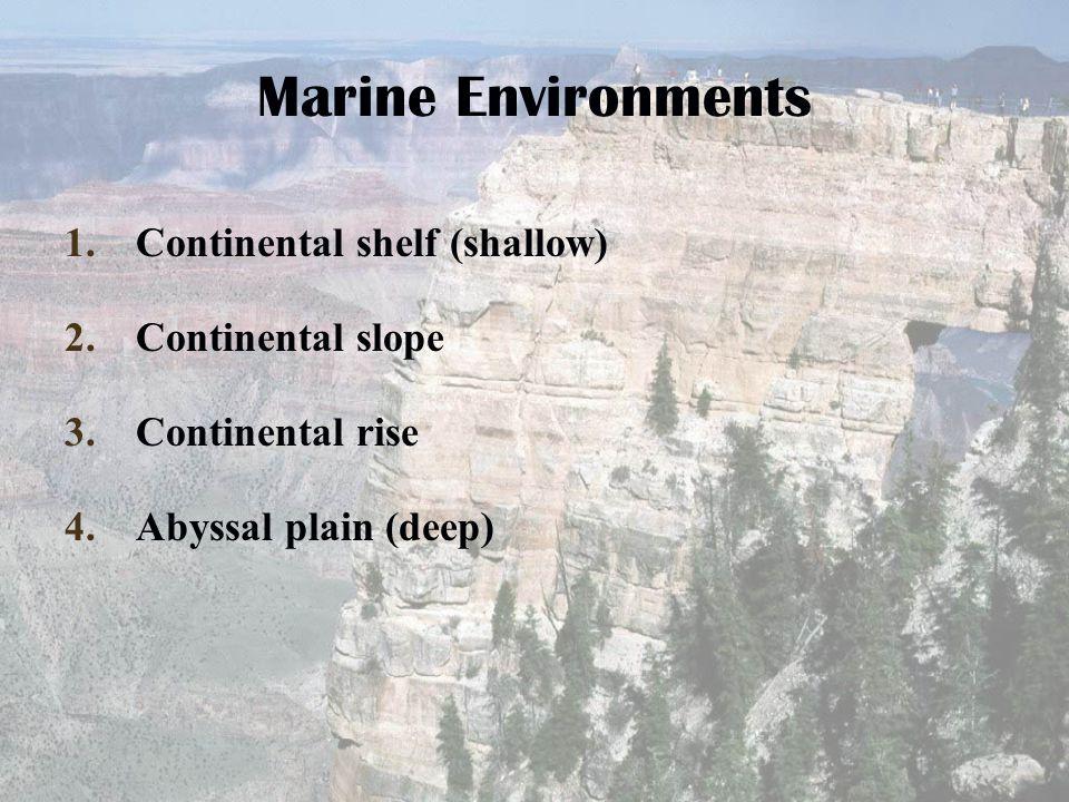 Marine Environments 1.Continental shelf (shallow) 2.Continental slope 3.Continental rise 4.Abyssal plain (deep)