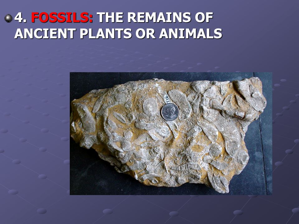 4. FOSSILS: THE REMAINS OF ANCIENT PLANTS OR ANIMALS