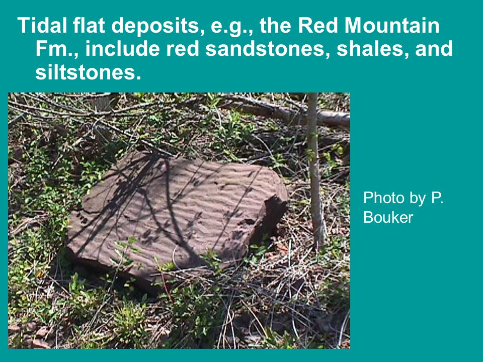 Tidal flat deposits, e.g., the Red Mountain Fm., include red sandstones, shales, and siltstones.