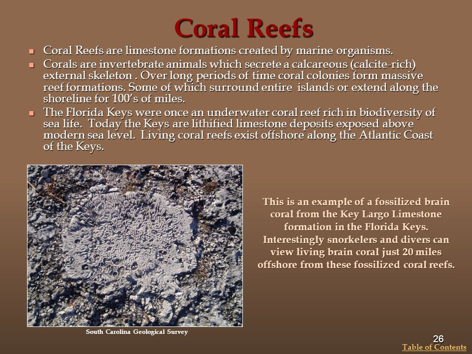Coral Reefs Coral Reefs are limestone formations created by marine organisms. Coral Reefs are limestone formations created by marine organisms. Corals