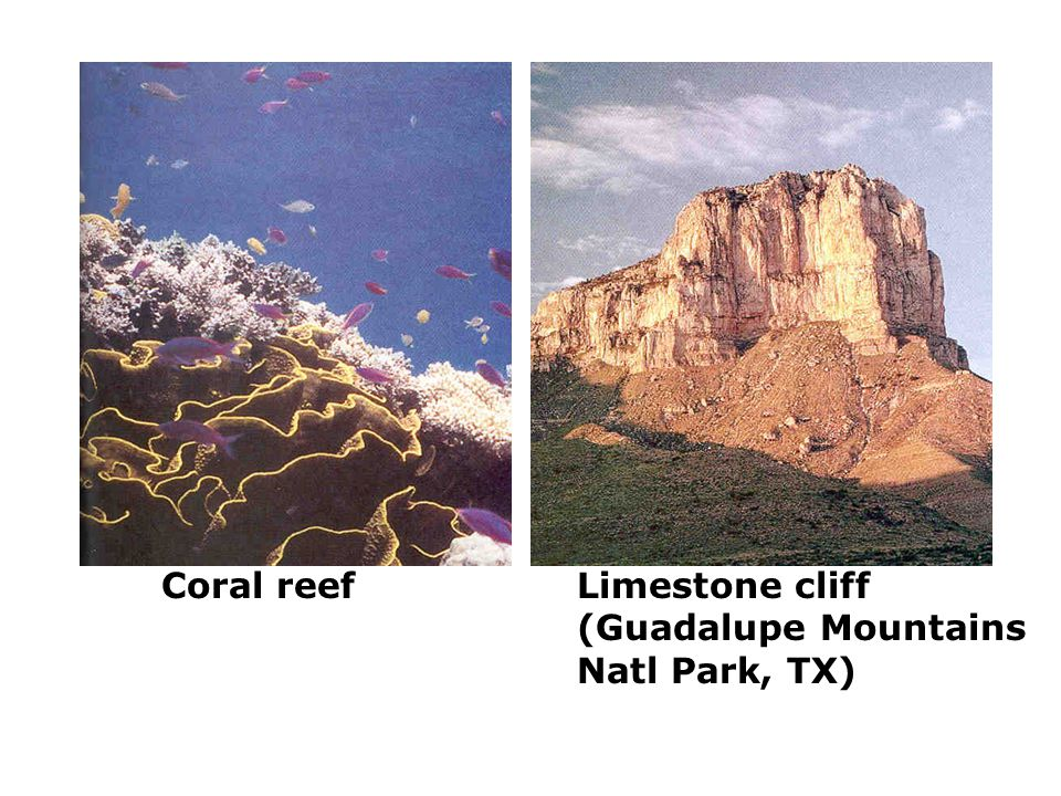 Coral reefLimestone cliff (Guadalupe Mountains Natl Park, TX)