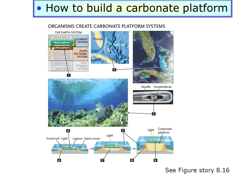 How to build a carbonate platform See Figure story 8.16