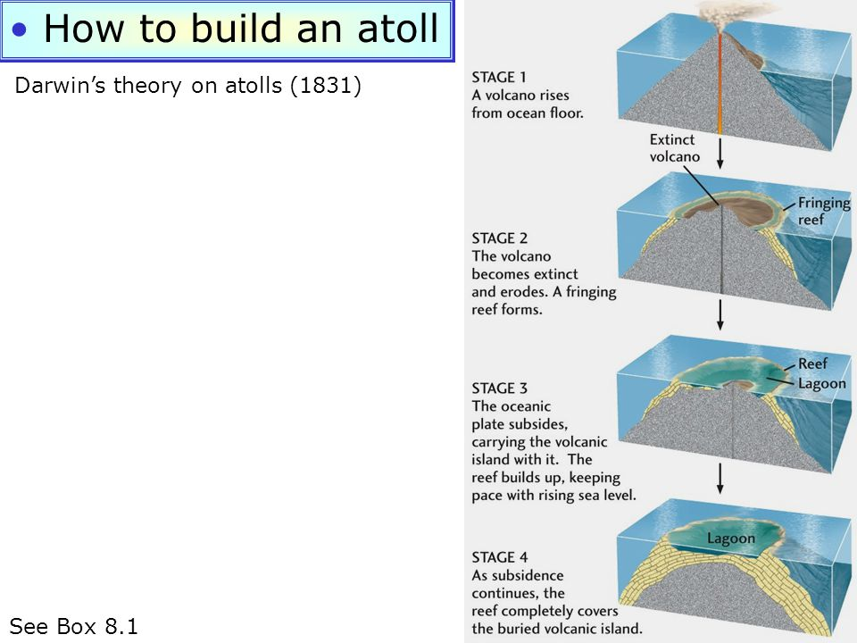 How to build an atoll See Box 8.1 Darwin's theory on atolls (1831)