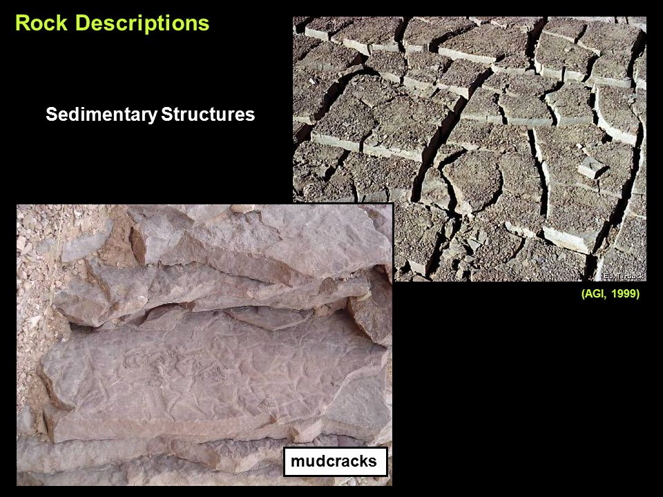 Rock Descriptions Sedimentary Structures mudcracks (AGI, 1999)