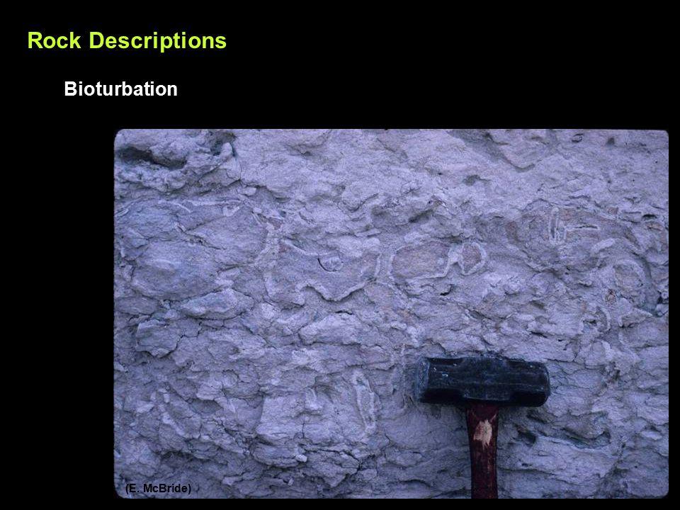 Rock Descriptions Bioturbation (E. McBride)