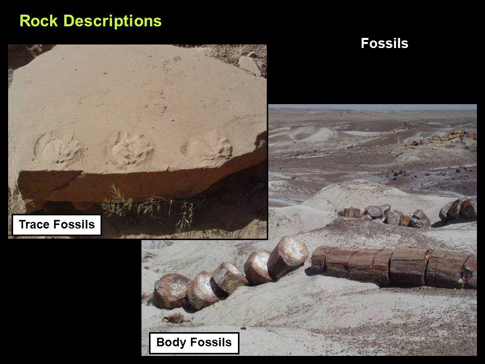 Trace Fossils Rock Descriptions Fossils Body Fossils