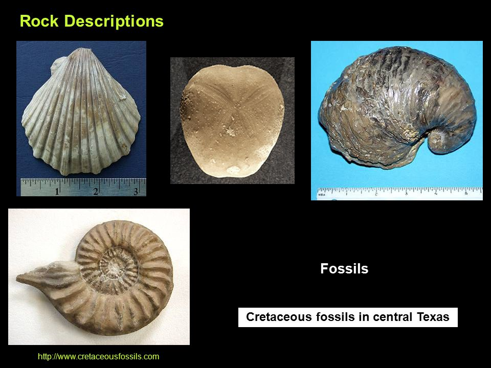 Cretaceous fossils in central Texas http://www.cretaceousfossils.com Rock Descriptions Fossils
