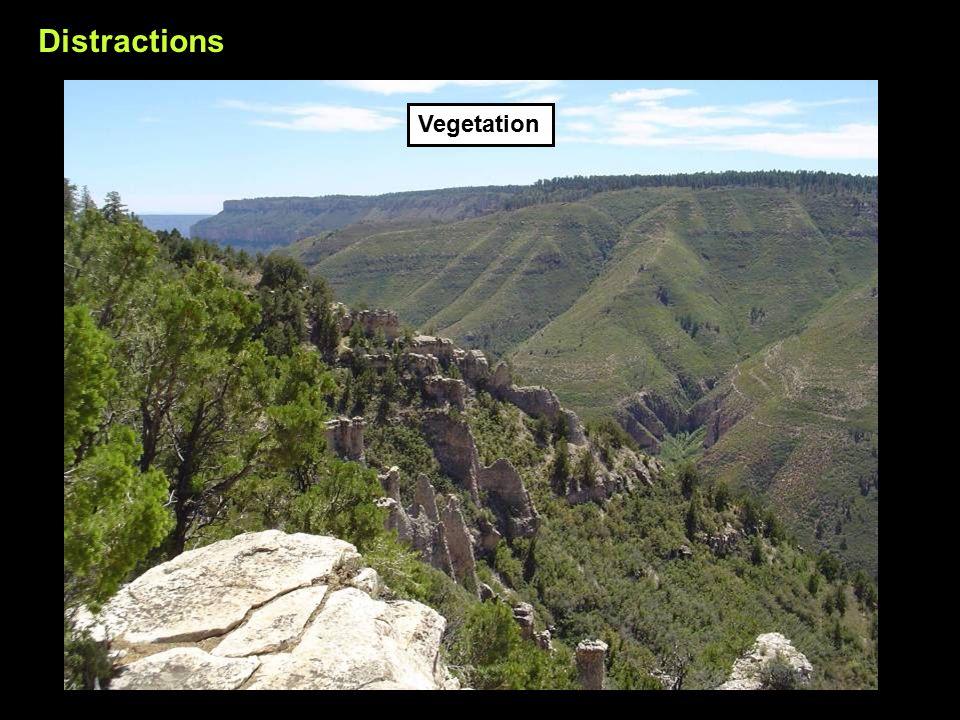 Distractions Vegetation