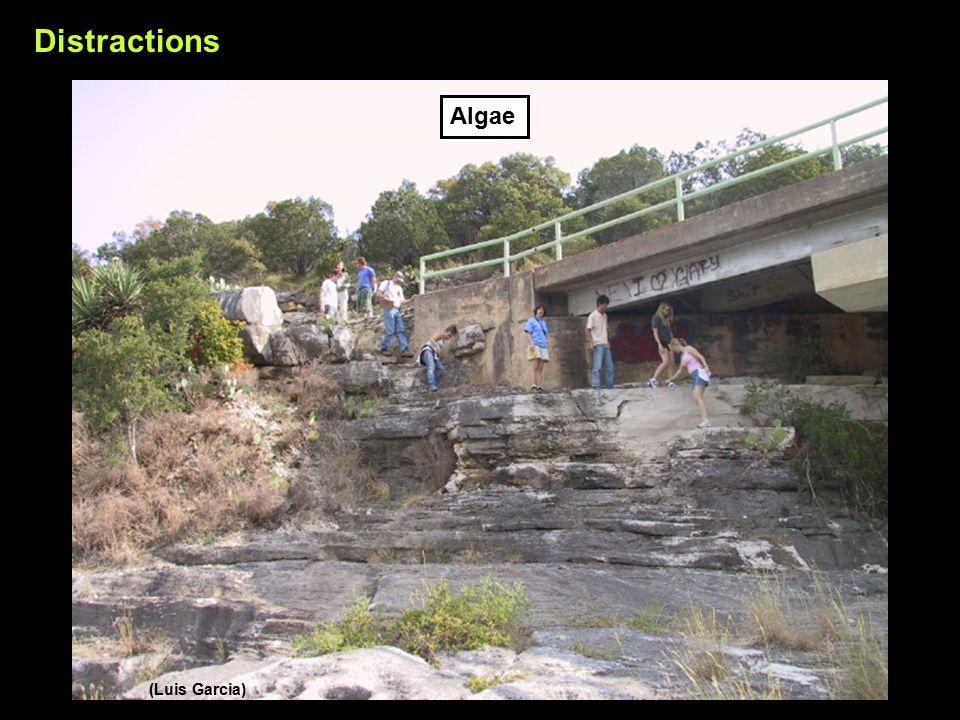 (Luis Garcia) Distractions Algae