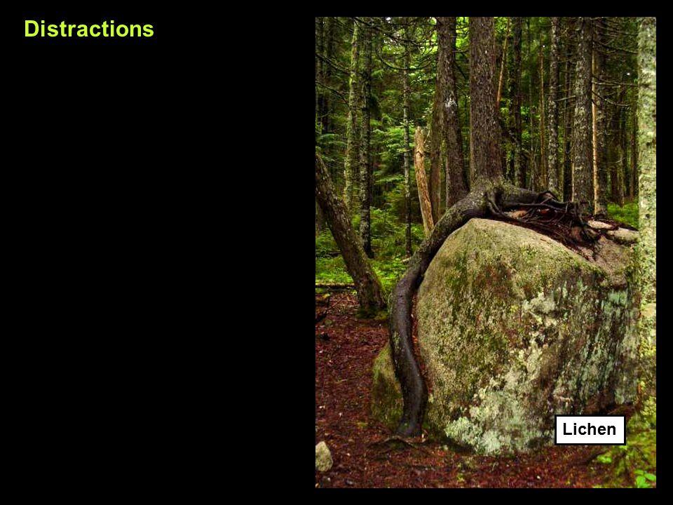 Distractions Lichen