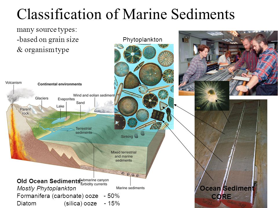 Classification of Marine Sediments many source types: -based on grain size & organism type Old Ocean Sediments: Mostly Phytoplankton Formanifera (carbonate) ooze - 50% Diatom (silica) ooze - 15% Phytoplankton Ocean Sediment CORE