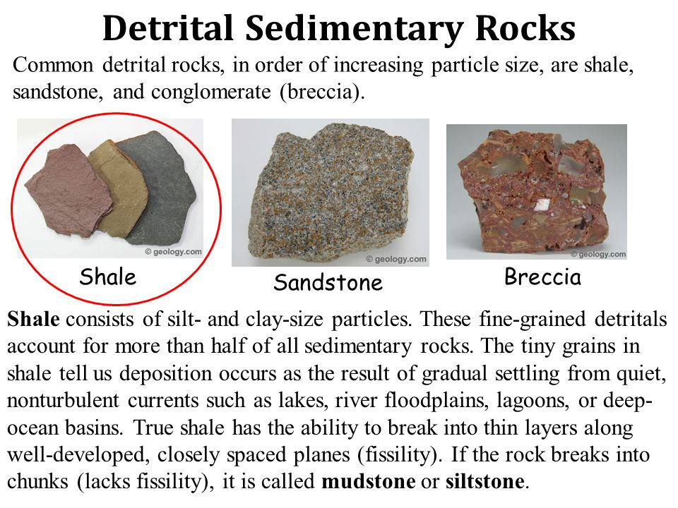 Detrital Sedimentary Rocks Common detrital rocks, in order of increasing particle size, are shale, sandstone, and conglomerate (breccia).
