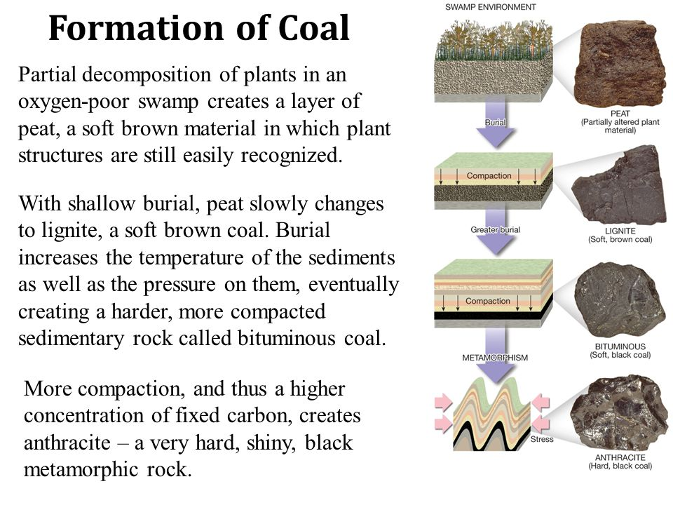 Formation of Coal Partial decomposition of plants in an oxygen-poor swamp creates a layer of peat, a soft brown material in which plant structures are still easily recognized.