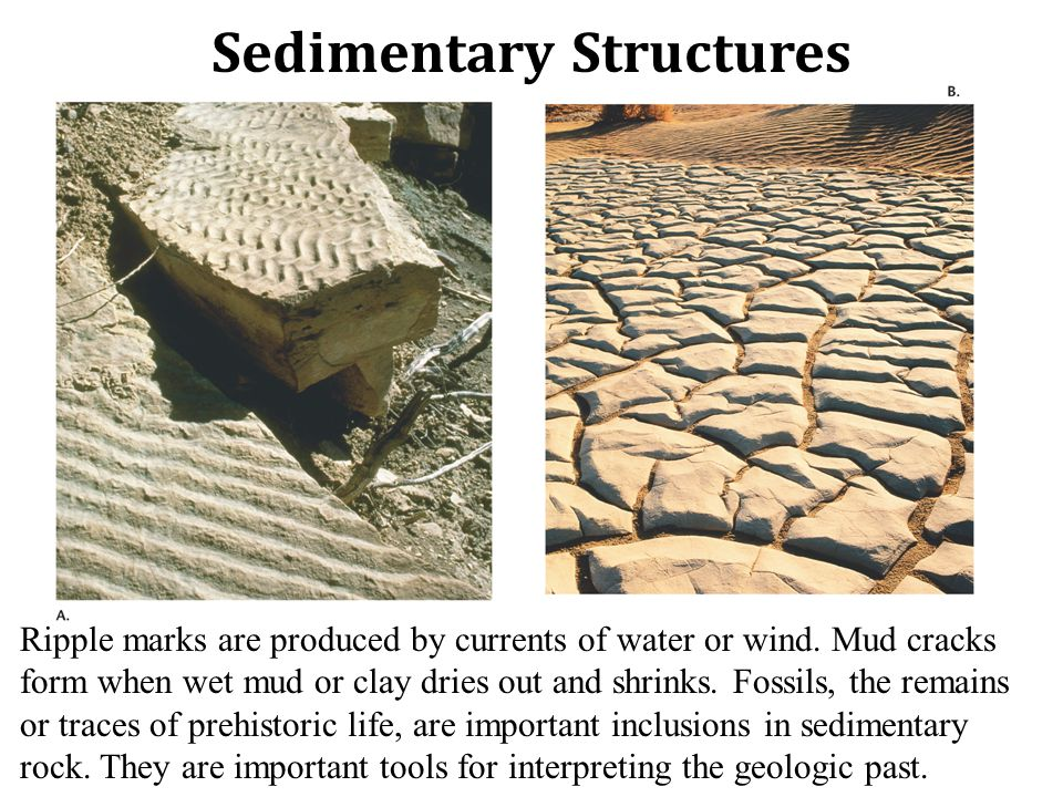 Sedimentary Structures Ripple marks are produced by currents of water or wind.
