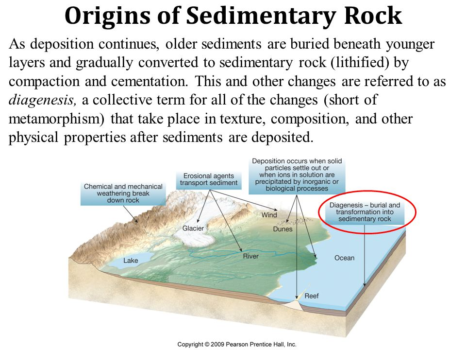 Origins of Sedimentary Rock As deposition continues, older sediments are buried beneath younger layers and gradually converted to sedimentary rock (lithified) by compaction and cementation.