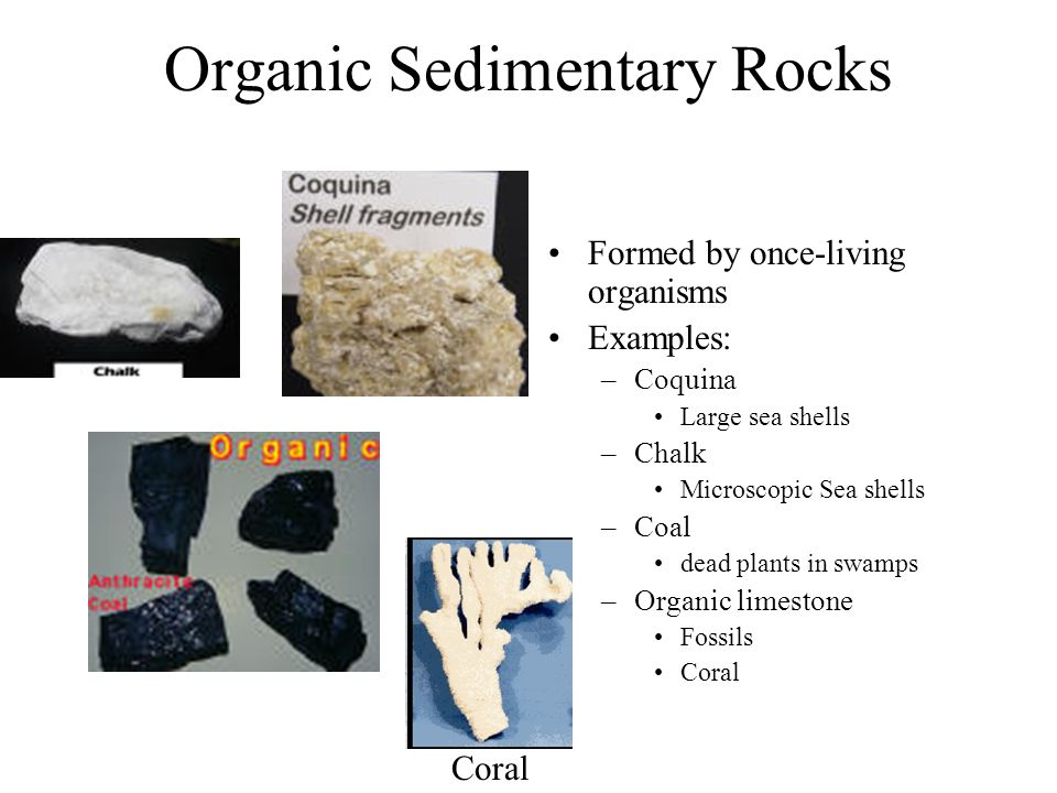 Organic Sedimentary Rocks Formed by once-living organisms Examples: –Coquina Large sea shells –Chalk Microscopic Sea shells –Coal dead plants in swamp