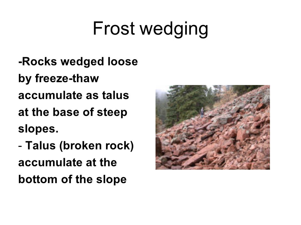 Frost wedging -Rocks wedged loose by freeze-thaw accumulate as talus at the base of steep slopes. - Talus (broken rock) accumulate at the bottom of th