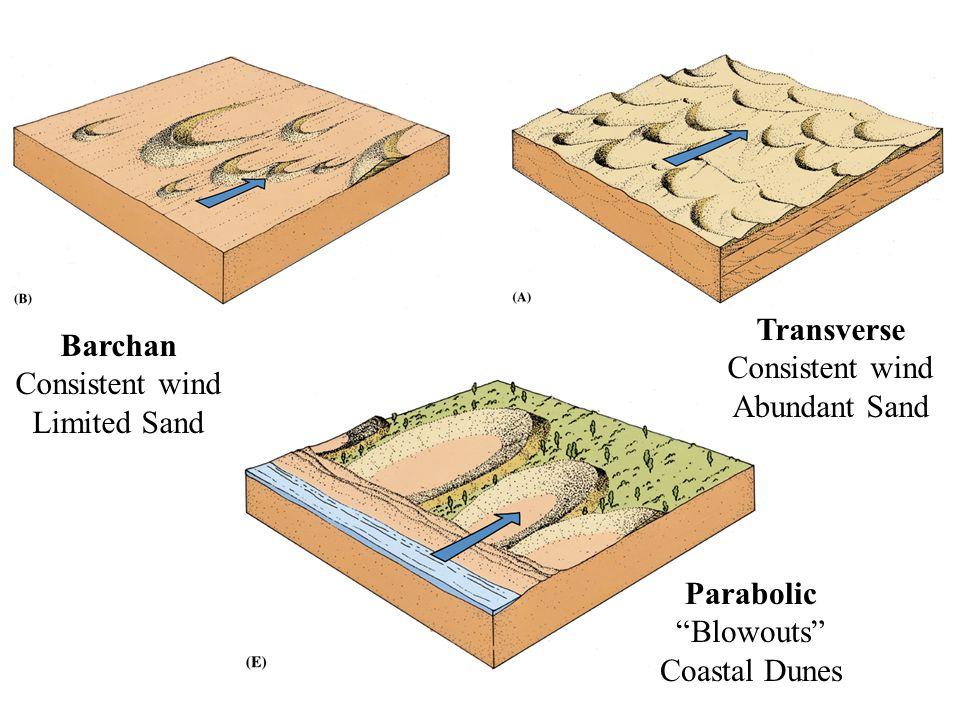 Barchan Consistent wind Limited Sand Transverse Consistent wind Abundant Sand Parabolic Blowouts Coastal Dunes