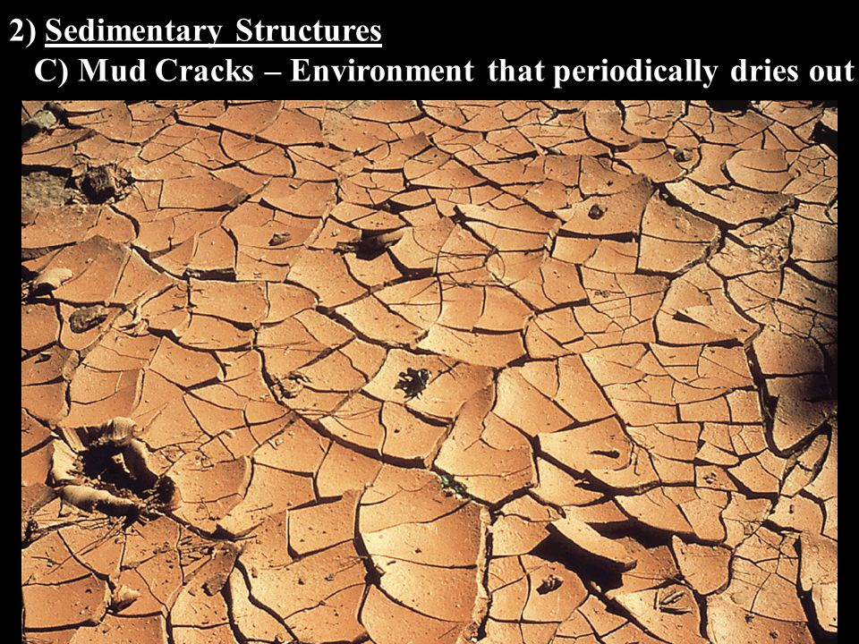 2) Sedimentary Structures C) Mud Cracks – Environment that periodically dries out