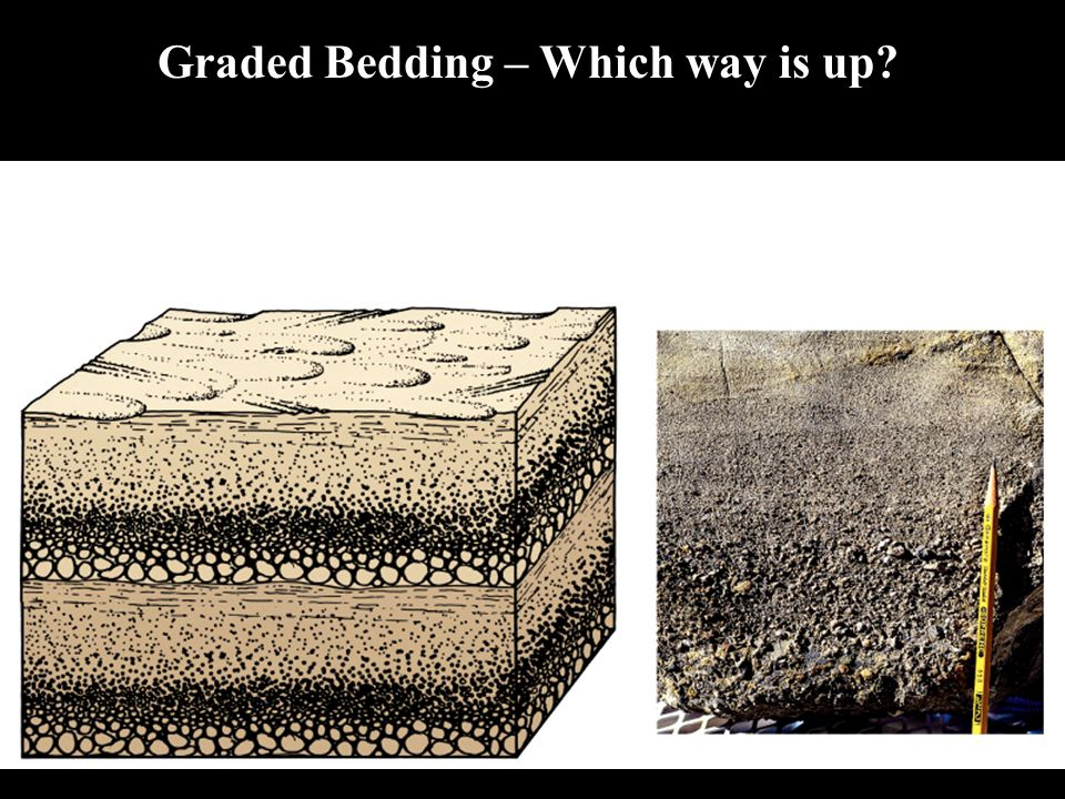 Graded Bedding – Which way is up?