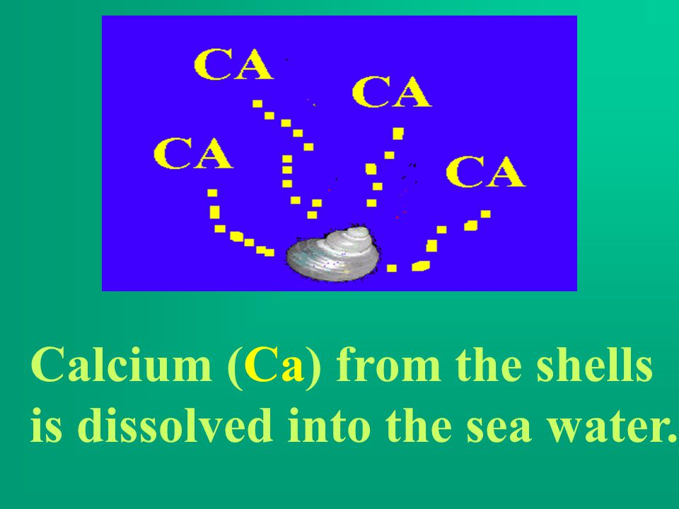 Calcium (Ca) from the shells is dissolved into the sea water.