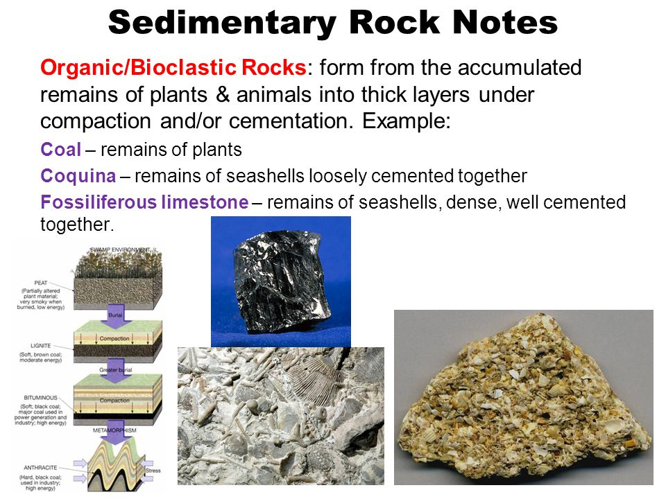 Sedimentary Rock Notes Organic/Bioclastic Rocks: form from the accumulated remains of plants & animals into thick layers under compaction and/or cementation.