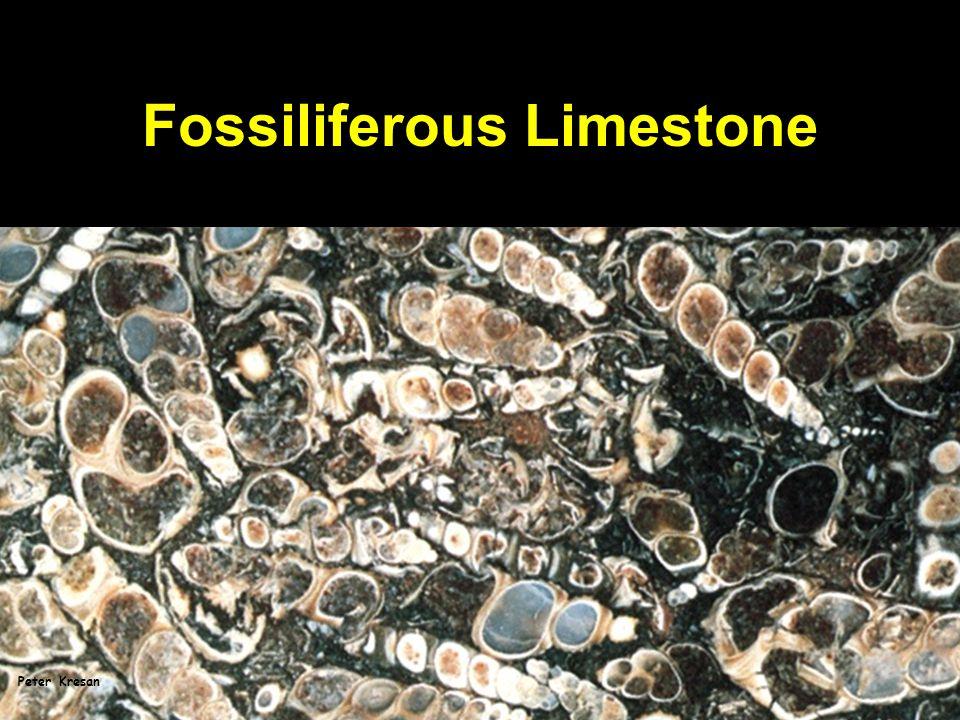 Fossiliferous Limestone Peter Kresan