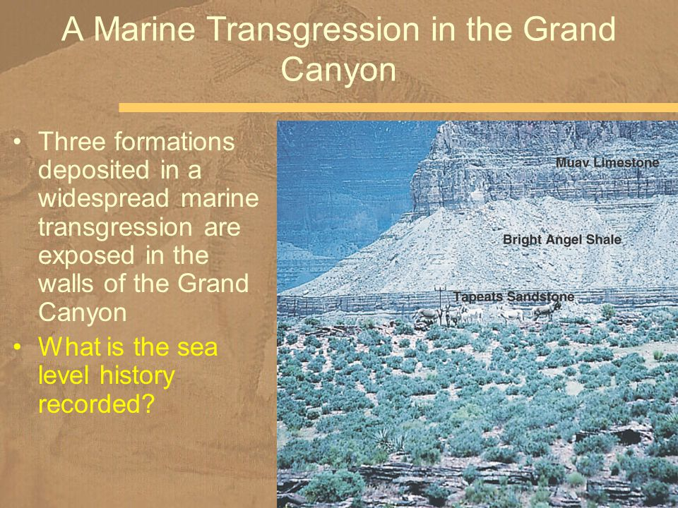 Three formations deposited in a widespread marine transgression are exposed in the walls of the Grand Canyon What is the sea level history recorded? A