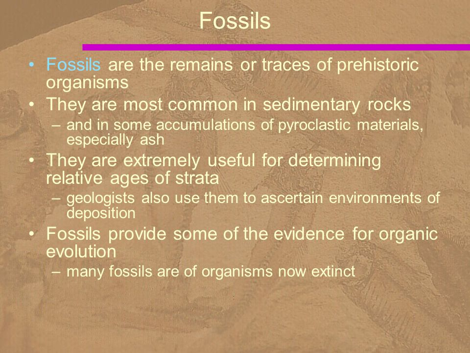 Fossils are the remains or traces of prehistoric organisms They are most common in sedimentary rocks –and in some accumulations of pyroclastic materia