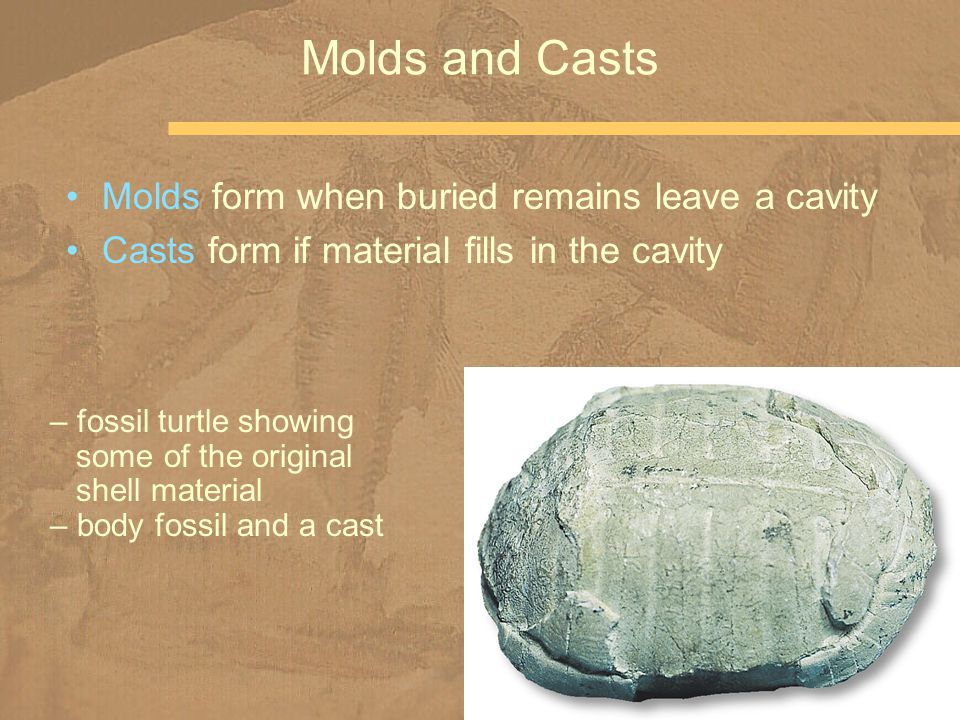 Molds form when buried remains leave a cavity Casts form if material fills in the cavity Molds and Casts – fossil turtle showing some of the original