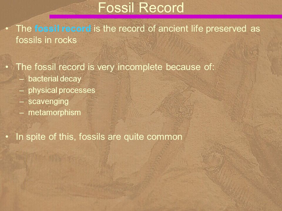 The fossil record is the record of ancient life preserved as fossils in rocks The fossil record is very incomplete because of: –bacterial decay –physi